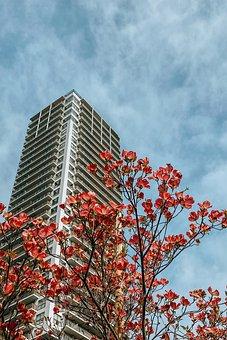 Tower, Building, Tree, Flowers, Petals, Balconies