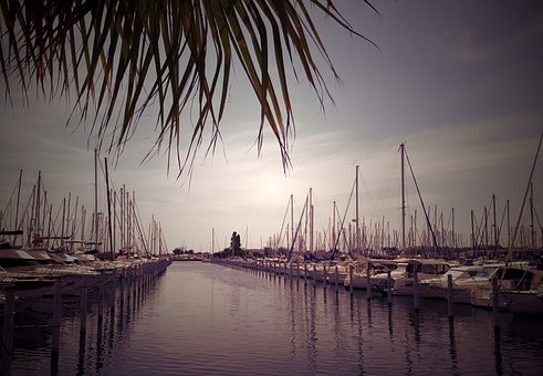 Boats, Sailboats, Port, Mast, Palm Tree, Sea, Holiday
