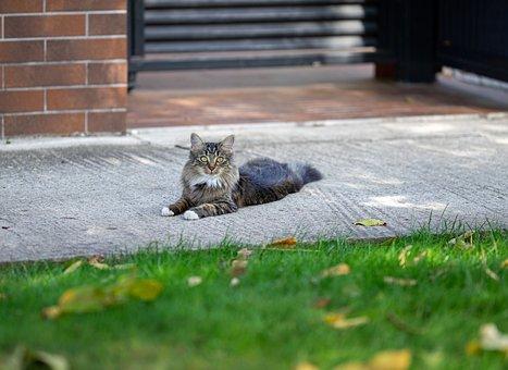 Cat, Rest, Pet, Animal, Mammal, Kitty, Feline, Resting