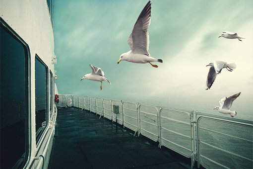 Seagulls, Flying, Ship, Boat, Deck, Fog, Mist, Birds