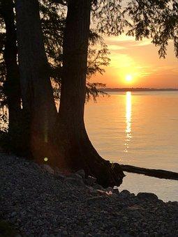 Sunset, Lake, Coast, Tree, Sun, Sunlight