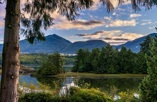 Lake, Mountains, Trees, Conifers, Forest