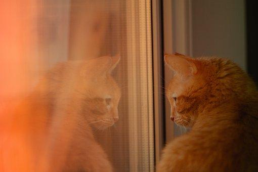Cat, Window, Reflection, Animal, Window Sill, Mirroring