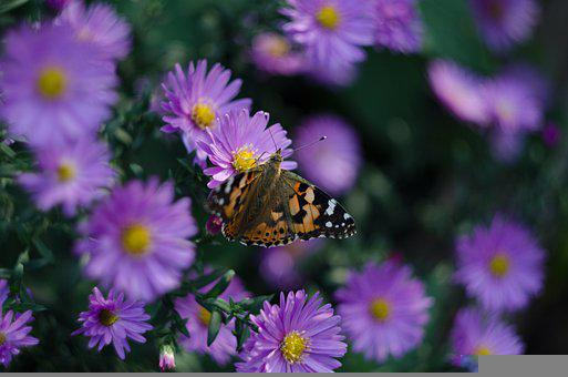 Nature, Flowers, Butterfly, Insect, Animal, Pollination
