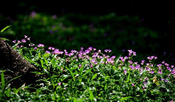 Small Flowers, Grass, Wildflowers, Field