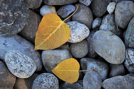 Autumn Leaves, Rocks, The Stones, Pebbles, Gravel
