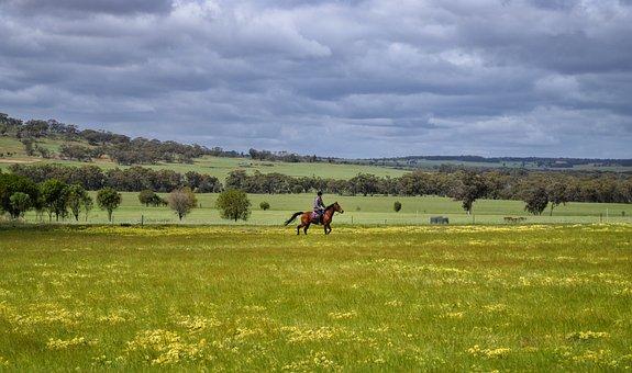 Nature, Field, Horseback Riding, Horse Riding