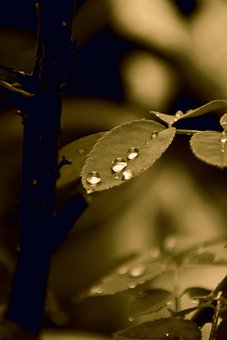 Nature, Leaves, Dew, Dewdrops, Droplets, Raindrops