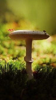 Nature, Mushroom, Toadstool, Fungus, Forest