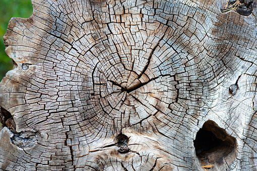 Tree, Butt, Wood, Pattern, Structure, Annual Rings, Old