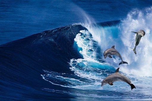 Dolphins, Mammals, Waves, Aquatic Mammals