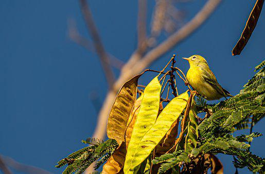 Bird, Warbler, Songbird, Wings, Feathers, Perched, Beak