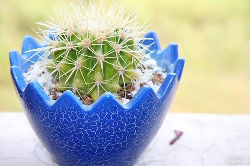 Plant, Light, Cactus
