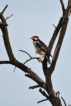 Bird, Perched, Tree, Dead Tree, Perched Bird, Ave