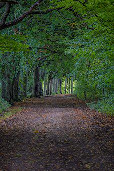 Forest, Path, Trees, Trail, Forest Path, Forest Trail