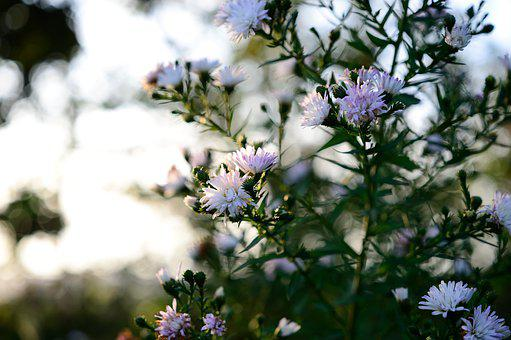 Garden, Flowers, Buds, White Flowers, Wildflowers