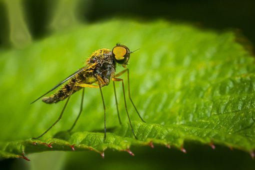 Leaf, Insect, Robber Fly, Assassin Fly, Pest, Animal