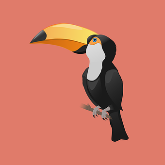 Bird, Toucan, Feathers, Beak, Tropical, Nature
