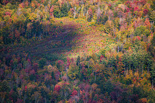 Forest, Woods, Trees, Colorful, Slope, Hill, Mountain