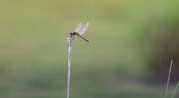 Nature, Insect, Dragonfly, Animal, Wildlife, Closeup
