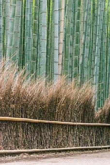 Bamboos, Arashiyama, Bamboo Trees, Bamboo Forest