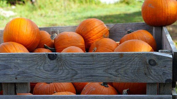 Pumpkins, Harvest, Crate, Wooden Box, Food, Produce