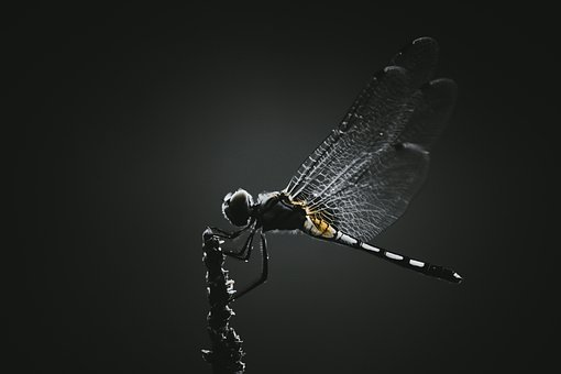 Dragonfly, Insect, Wings, Winged, Dragonfly Wings