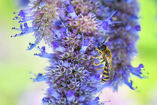 Wasp, Flowers, Forage, Pollinate, Pollination