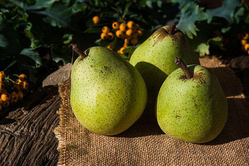 Pears, Fruits, Harvest, Produce, Organic, Fresh