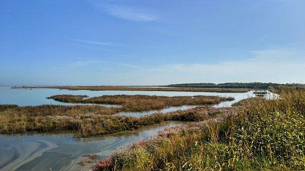Nature, Lagoon, Marsh Plants, Grass, Foliage