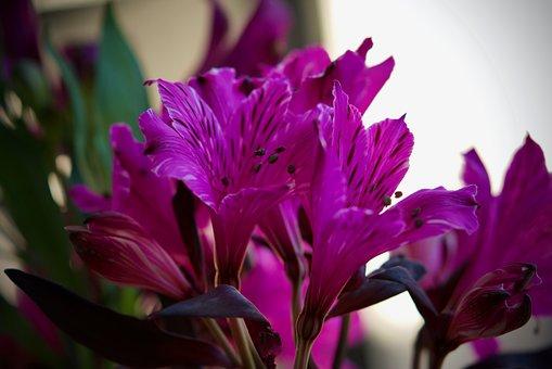 Flowers, Purple Flowers, Bloom, Blossom, Flora