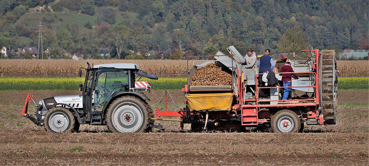 Tractor, Potatoes, Farm, Farmers, Agriculture, Harvest