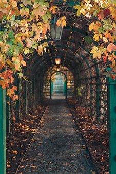 Path, Autumn, Tunnel, Leaves, Foliage, Autumn Leaves