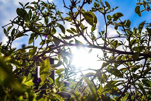 Tree, Leaves, Foliage, Sun, Sunlight, Backlighting