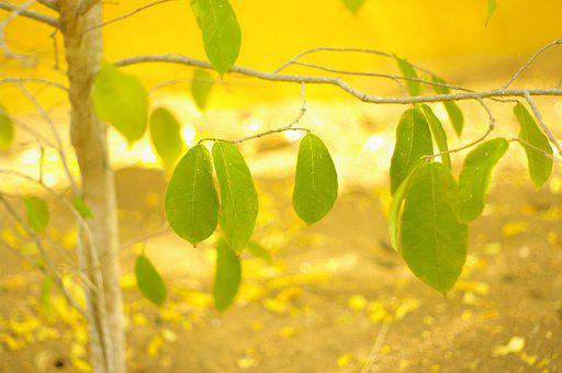 Leaves, Tree, Branches, Twigs, Sprigs, Foliage, Nature