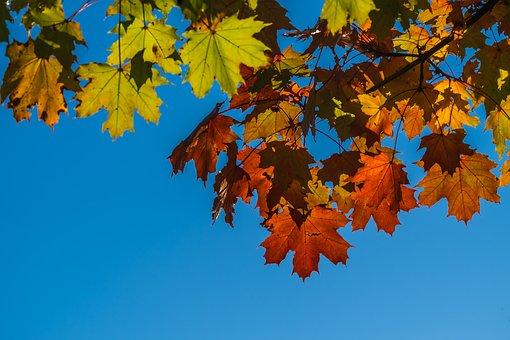 Autumn, Leaves, Foliage, Fall Leaves, Fall Color