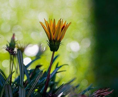 Flower, Petals, Buds, Grass, Leaves