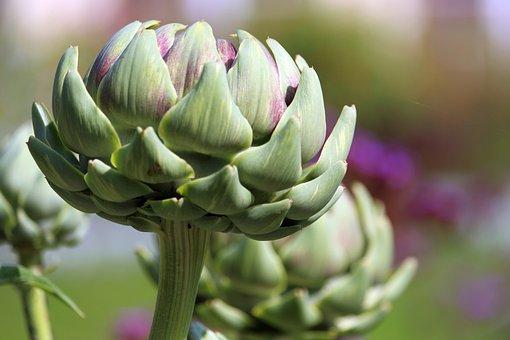 Flower, Artichoke, Bud, Edible, Vegetables, Food