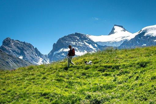 Mountains, Man, Dog, Pet, Alps, Alpine, Grass, Hiking