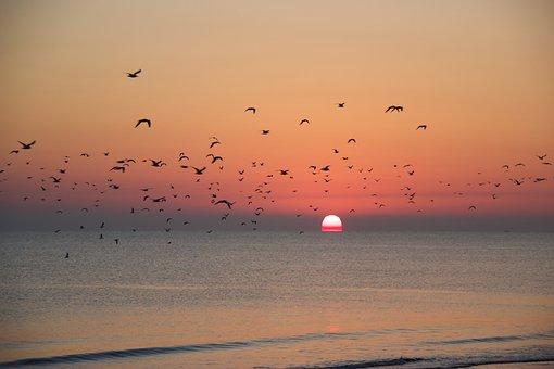 Sunset, Migration, Beach, Sea, Birds, Silhouette