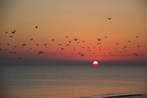 Sunset, Migration, Sea, Birds, Silhouette, Flight