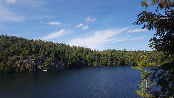 Lake, Trees, Forest, Woods, Conifers, Coniferous