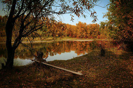 Autumn, River, Forest, Trees, Woods, Woodland, Leaves