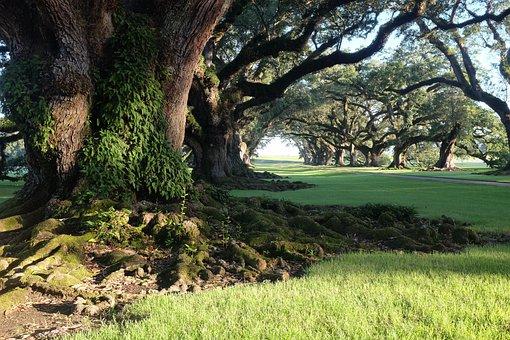 Oak Allay Plantation, Plantation, America