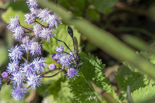 Plant, Flowers, Wasp, Insect, Animal, Bluemink, Bloom