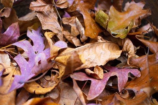 Leaves, Autumn, Dried, Foliage, Autumn Leaves