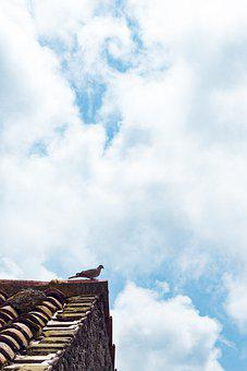 Roof, Dove, Bird, House, Sky, Clouds, Tiles, Building