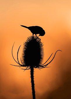 Bird, Plant, Silhouette, Nature, Wild, Colorful, Sun