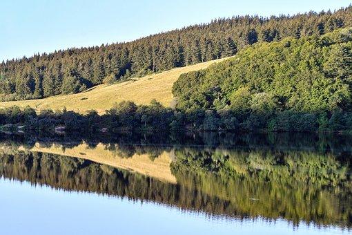 Lake, Trees, Fields, Forest, Conifers, Coniferous