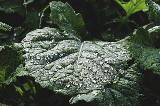 Leaves, Drip, Raindrops, Rain, Nature, Drop Of Water